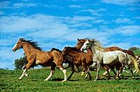 horses _ running on meadow