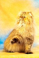 Persian cat _ sitting _ cut out