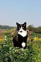 cat in basket in the meadow