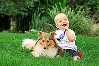 Sheltie and boy on meadow