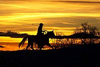 A cowboy works his lariat along the range at sunset, Shell, Wyoming, Usa