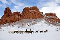Wranglers leading their horses through the ranges of wyoming after a winter stormwranglers out for a ride in winter Shell, Wyoming, Usa