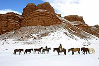 Horses galloping through the snow in Shell, Wyoming, Usa