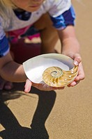 Girl 6_7 examining nautilus shell on beach