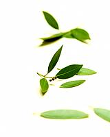 Herb leaves on white background