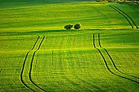 Planted fields and rolling green hills, Dorset, UK