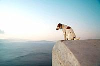 Dog on a roof, Oia, Santorin, Cyclade, Greece, Europe