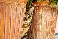 Cat hiding between 2 flowerpots