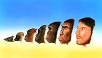 Human evolution. Artwork showing a snapshot of the evolution of humans from earlier forms of life. At far left is the shrew_like mammal, Purgatorius 6...