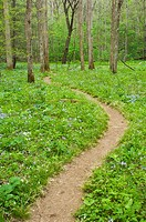 Trail winding through natural garden of spring wildflowers