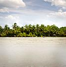 Costa Rica, palm trees near beach