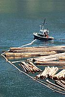 Log boom boats organizing logs at Adans Lake saw mill, BC, Canada
