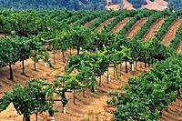 Raymond Burr Vineyards, Dry Creek Road, Sonoma County, California