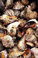 mollusk at market