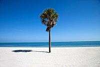Single palm tree on Crandon Beach