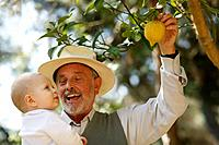 Grandfather showing lemon tree to baby