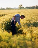 Farmer, Checking Barley, Ireland