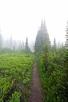 Trail in morning fog, Mount Rainier National Park, Washington, USA