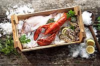 Fish, lobster, and oysters in box of ice