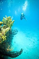 Caribbean, St Lucia, underwater view of shipwreck with sponges and corals