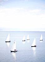 Yachts at sea