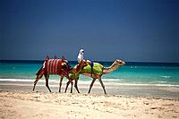 Camel riding, Jumeirah Beach, Dubai, VAE