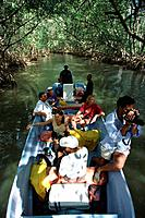 Boat trip through the Mangroves, Los Haitises National park, Dominican Republic, Caribbean