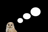 Speech bubbles coming from an owl