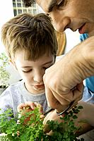 Father and son pruning plant together