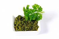 Herb pesto with Parsley