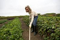 Woman working in an organic garden, Ladner, British Columbia, Canada
