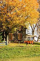 View of horse and house in autumn landscape, Eastern Townships, Quebec, Canada
