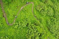 Four downhill cyclists on a path, aerial perspective