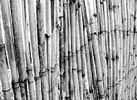 natural and primitive fence made of bamboos