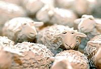 Ceramic sheep