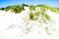 Sand dunes and beach grass, Skagen, Jutland, Denmark