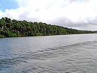 sao luis do maranhao green vegetation on the river coast