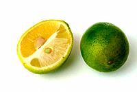 Limequats, crossbreed of Citrus aurantiifolia and Fortunella japonica, Round marumi Kumquat and lime fruit, beside a lime fruit