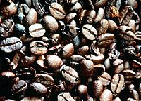 toasted coffee grains seeds