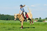 Young rider on back of a bucking Haflinger horse