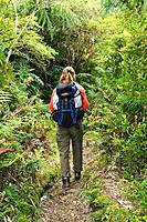 Chile, South America, Pumalin Park, woman, rainforest, South America, Adventure, Outdoor, Outdoors, Trees, Carretera A