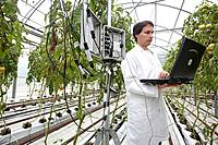 Researcher unloading temperature and moisture data from climatic station, soiless culture of tomatoes on cocoa fiber growing medium, greenhouses, Neik...
