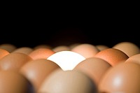 Light bulb glowing between eggs