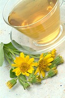 medicinal herbtea made of Mountain tobacco, Arnica, Arnica montana, Arnica,