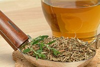 tea made of Knotgrass, Knotgrasstea, Polygonum aviculare,