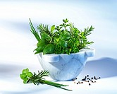 Green culinary herbs