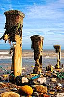 Remnants of mooring posts, Humberside, England