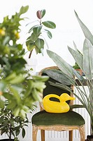 Duck_shaped watering can on velvet chair