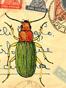 An old envelope with stamps from India, handwriting and a beetle