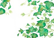 A watercolor illustration of leaves